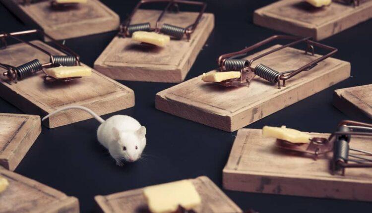 Rat Blockers The Best Solution To Stop Rat Infestation