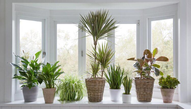 Home with Indoor Plants