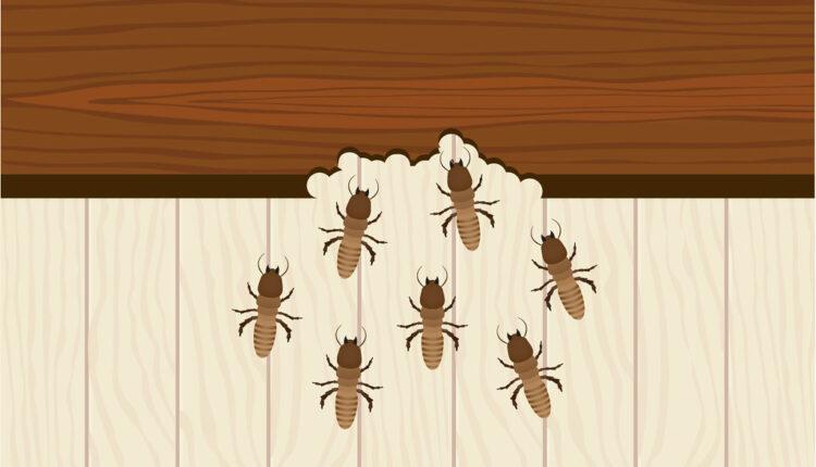 Pest Control010101